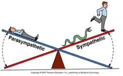 balance sympathique parasympathique