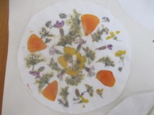 Mandala de plantes: herbier