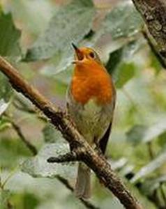 les oiseaux (2) (Copier)