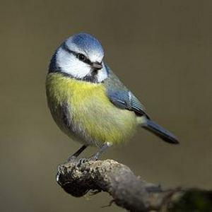 les oiseaux (4) (Copier)